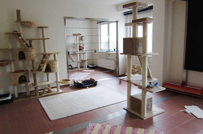Katzenpension Raum 1