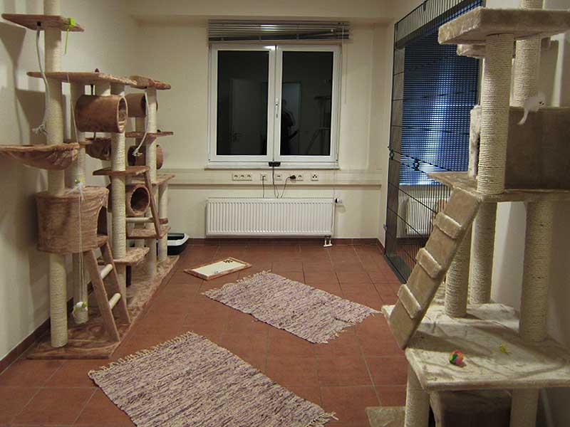 Katzenpension Raum 2